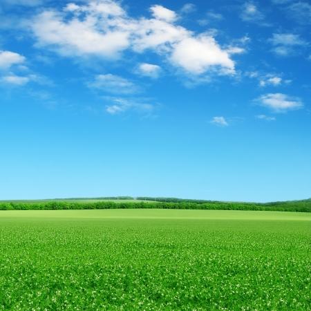 ciel avec nuages: champ vert et ciel bleu avec des nuages ??légers