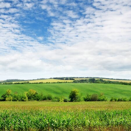 field with green plants and cloudy sky Stock Photo - 15221401