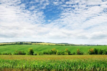 green field and sky with light clouds Stock Photo - 15681193
