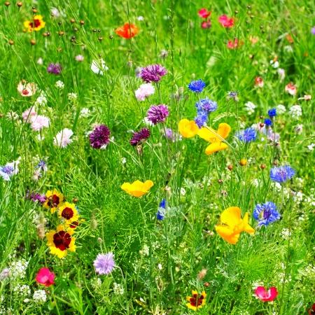 野生の花 写真素材