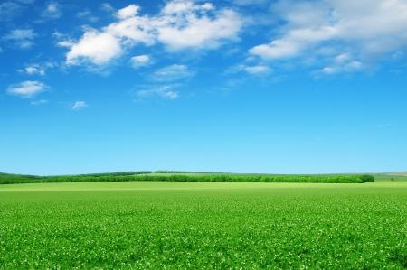 Mooie bloeiende velden Stockfoto