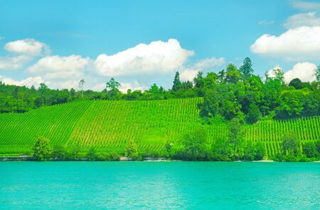 vineyards on the hilly bank of the river photo