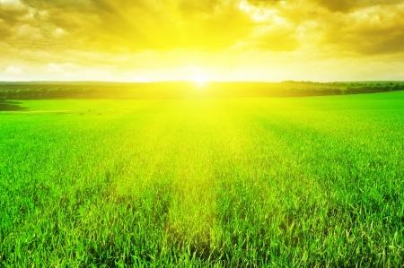 rayos de sol: hermoso amanecer en un campo de trigo Foto de archivo