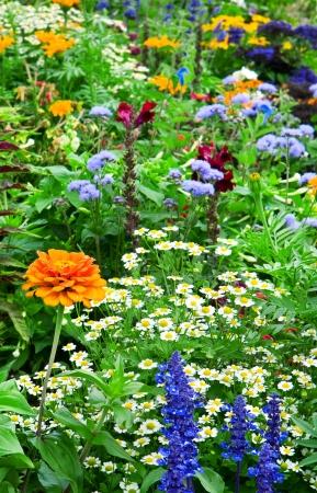 bloembed van heldere bloemen Stockfoto
