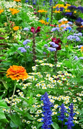 flower bed of bright flowers photo