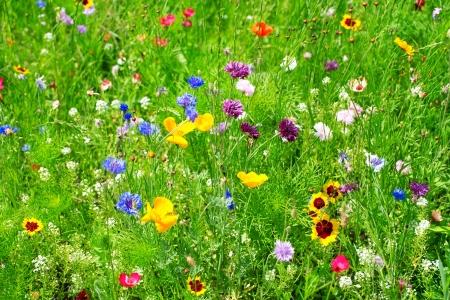 achtergrond van wilde bloemen Stockfoto