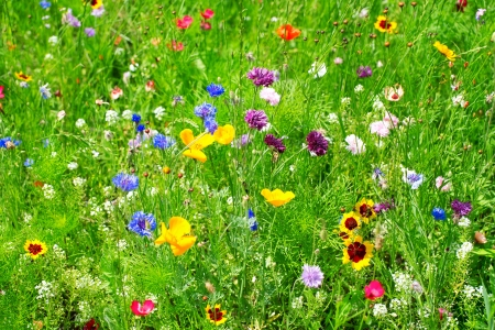 background of wild flowers