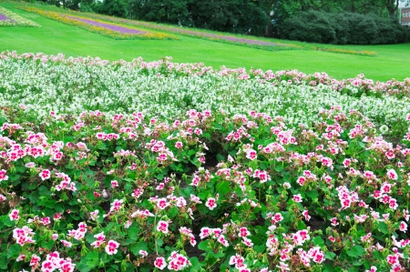 Beautiful flowerbed in city park photo