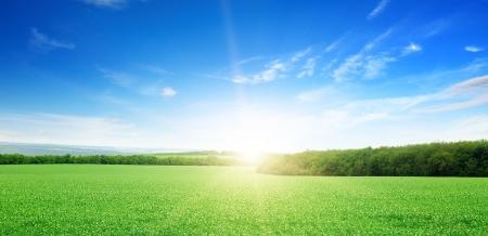 zonsopgang boven een groen veld Stockfoto