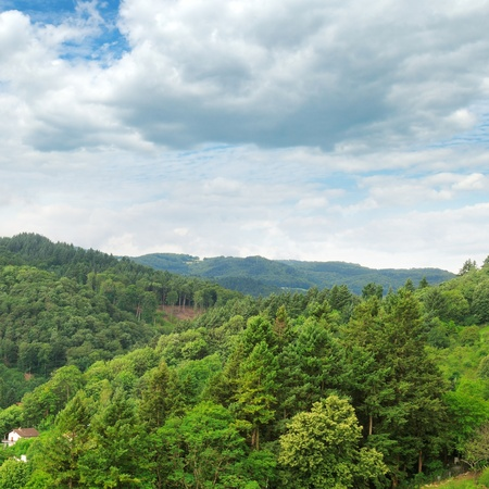 mountains covered with forests Stock Photo - 19122324
