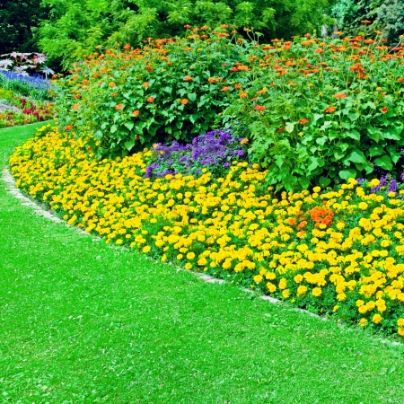 tagetes: Beautiful flowerbed in summer park Stock Photo
