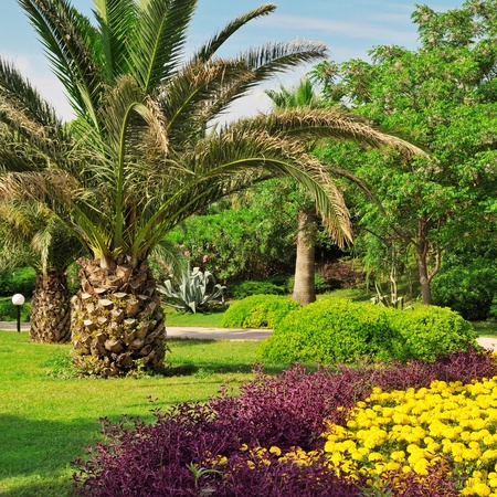 Tropical palm trees in a beautiful park photo