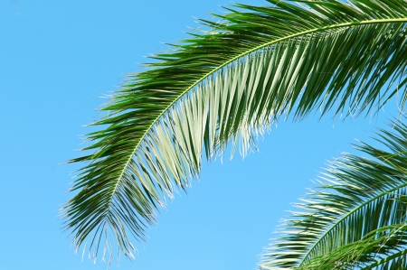 palm branch on background of blue sky photo