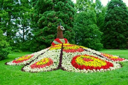 花の庭。孔雀の花壇。マイナウ島、ボーデン湖のドイツ語