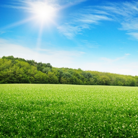 sunrise over a green field Stock Photo