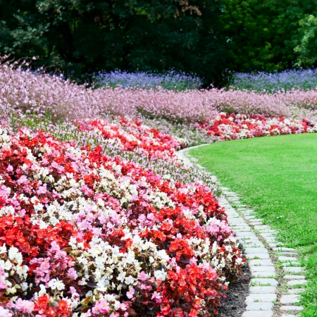 bright flower bed and green grass in the summer park photo