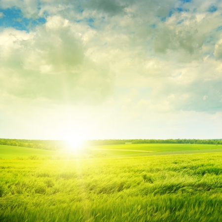 Beautiful sunset on green field photo