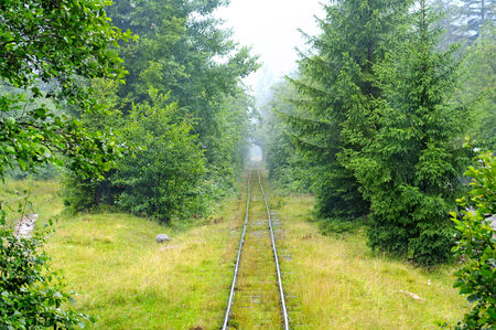 forest railway: narrow-gauge railway in the forest Stock Photo