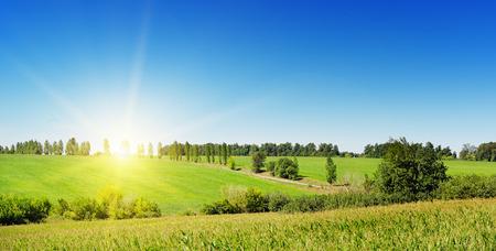 トウモロコシ畑の日の出