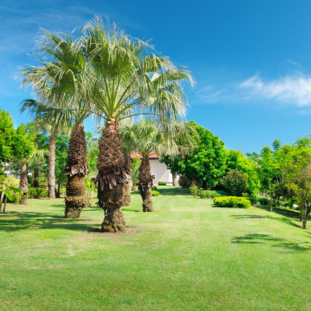 grassplot: Tropical palm trees in a beautiful park Stock Photo