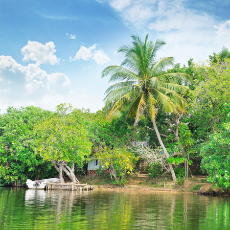 shores: Tropical river with palm trees on  shores