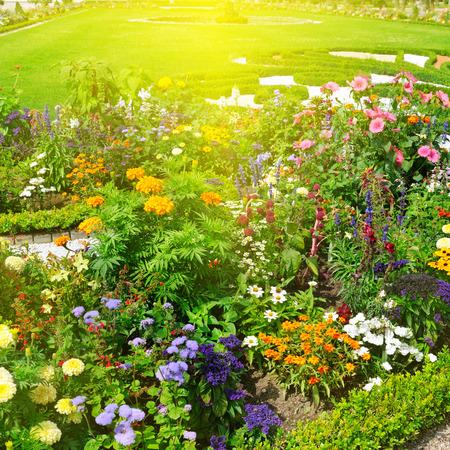 美しいフラワー ガーデンと日の出 写真素材