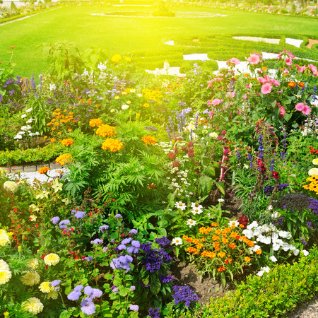 beautiful flower garden and sunrise