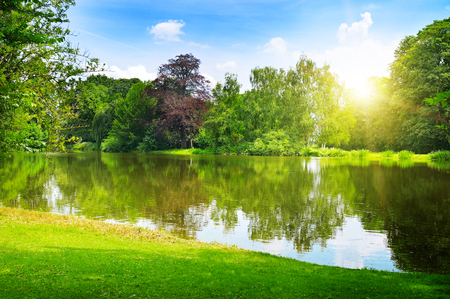 scenic lake in the summer park