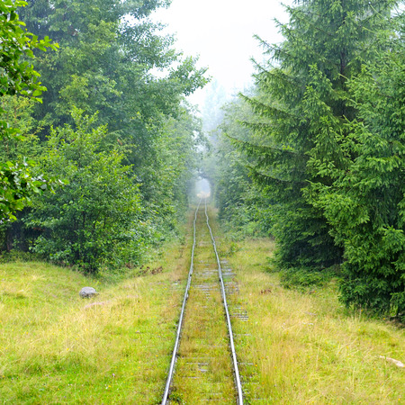 narrow-gauge railway in the forest photo
