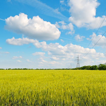 wheat field, blue sky and power lines photo