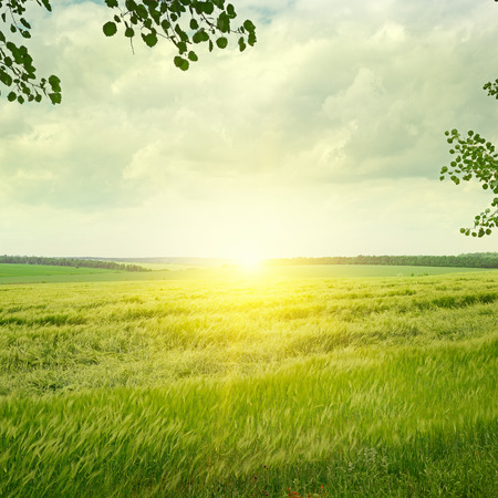 Beautiful sunrise  on spring field