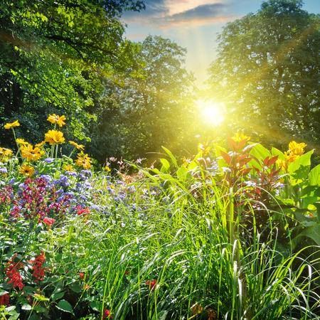 zomer park met een mooie bloem bed Stockfoto