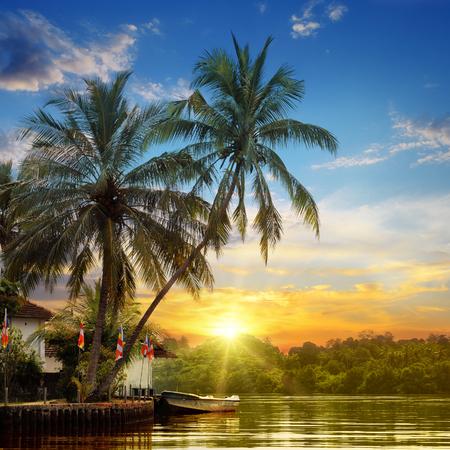 川、美しい日の出、熱帯のヤシ