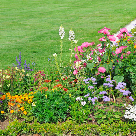 beautiful flower bed and green grass photo