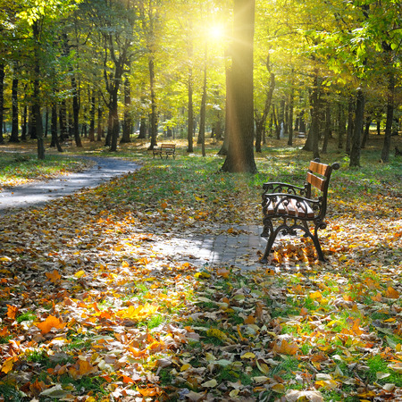 beautiful autumn park with paths and benches photo