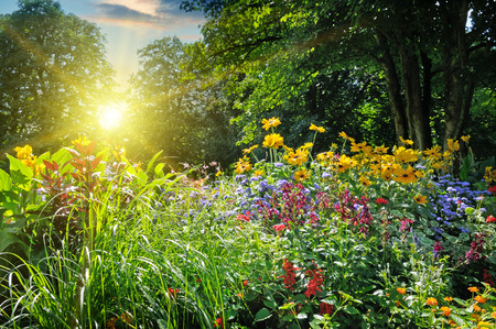 jardines con flores: parque de verano con una hermosa cama de flores