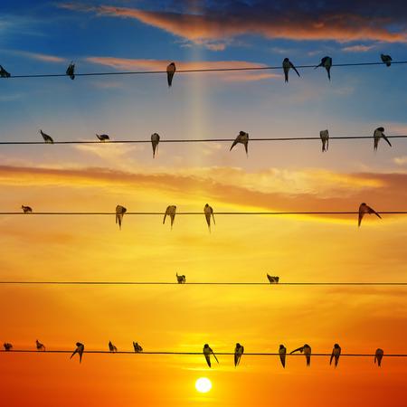zwerm vogels op de achtergrond van zonsopgang
