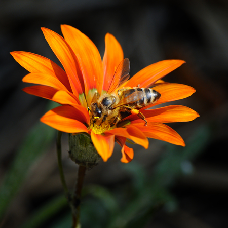 bee on a beautiful flower photo