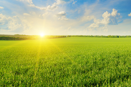 grass: field, sunrise and blue sky Stock Photo