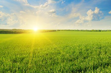 słońce: pole, wschód słońca i błękitne niebo