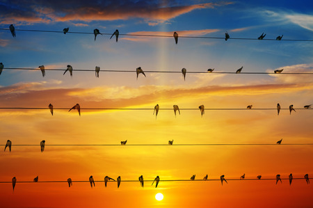 cloud background: flock of birds on a background of sunrise