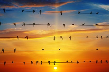 flock of birds on a background of sunrise
