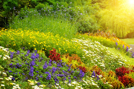 flowers field: beautiful background of bright garden flowers Stock Photo