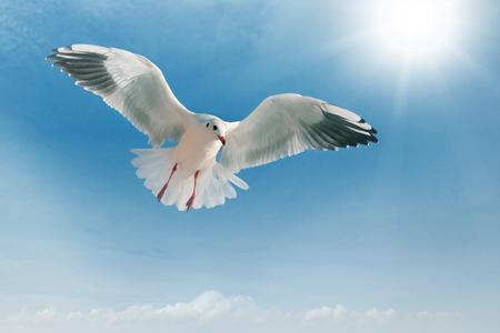 푸른 하늘을 비행 중에 갈매기