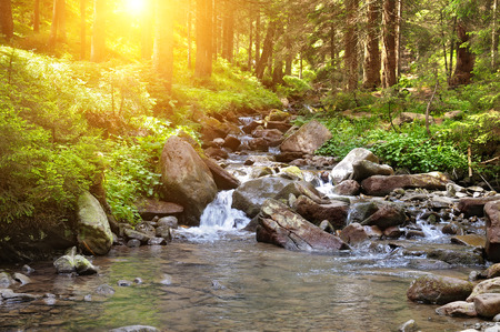 mountain river, forest and bright sun photo