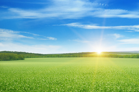 blue sky and fields: green field and sunrise
