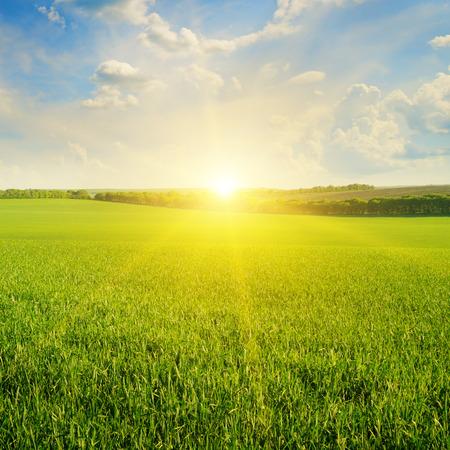 Feld, Sonnenaufgang und blauer Himmel Standard-Bild - 35704462