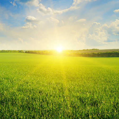 sun: field, sunrise and blue sky Stock Photo