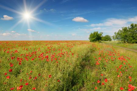 champ de coquelicots et de soleil sur ciel bleu