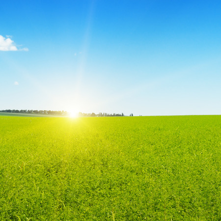 field, sunrise and blue sky Banque d'images